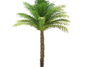 Date Palm Tree 3D Model 5m vacation