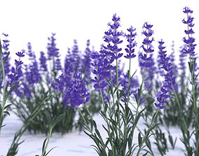Lavender 12 variations 3D