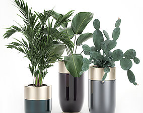 Houseplants in a luxury pot for the interior 704 3D model