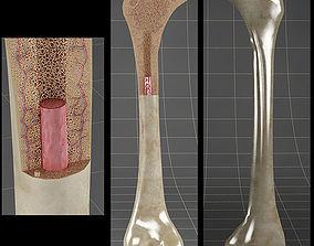 3D section Anatomy bone femoral
