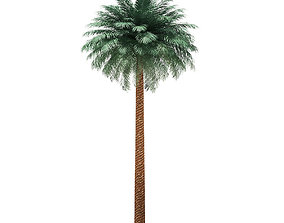 Silver Date Palm Tree 3D Model 11m
