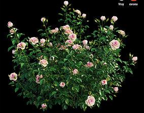 3D Plant rose set 07