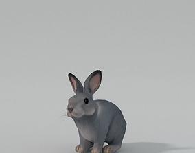 Grey Rabbit 3D model