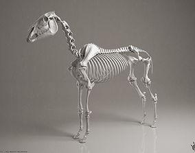femur 3D Horse Skeleton