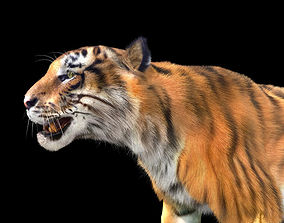 animated Tiger rigging For 3Dmax