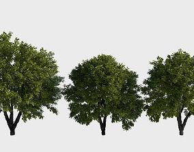 3D Generic trees