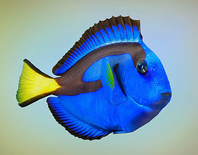 Fish Paracanthurus hepatus 3D model