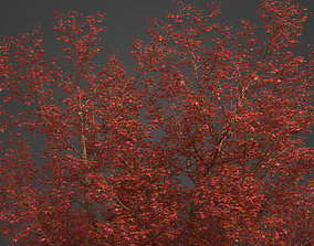 3D model 2021 PBR Montpelier Maple Collection - Acer