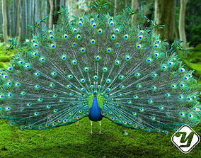 Peacock for 3ds Max rigged