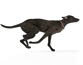Gray Colored Greyhound 3D model