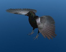 3D model surfaced Crow Surfaced