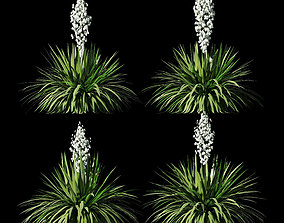 Blossoming yucca 4 models