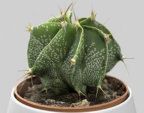 3D Cactus Decorative Vase