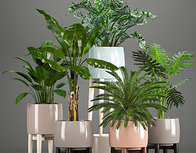 3D model Collection of plants in pots collection