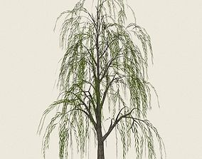 Game Ready Willow Tree 08 3D model