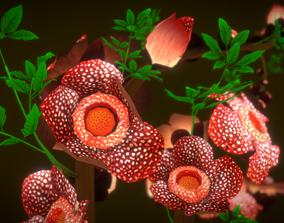 Flower Rafflesia arnoldii 3D asset