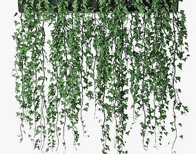 3D Ivy in pot 13