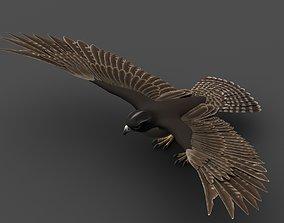 3D model rigged Falcon