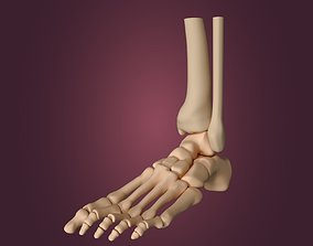 Skeletal Foot 3D model