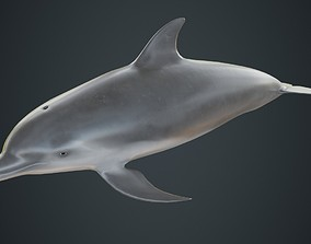 Dolphin 1A 3D model