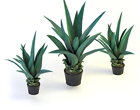 Agave - Game-ready Agave 3d model low-poly