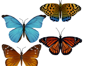 animated Beautiful Animated Butterflies Set 3D Model