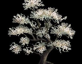 Plant - Whitewood Tree 3D