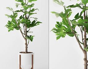 3D decor Fig Plant