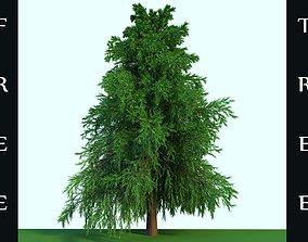 A Free Realistic Spruce Tree Boi 3D