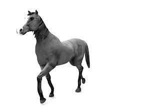 3D asset Horse aniamtion