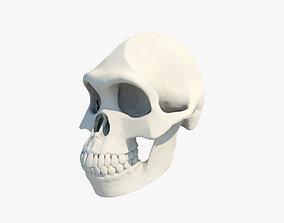 3D model Australopithecus Lucy Skull