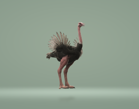 Ostrich 3D Animation animated game-ready