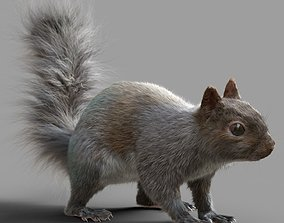 Squirrel Model