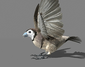3D asset Double Barred Finch static pose