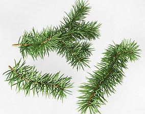 Fir branches 3D