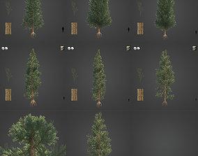 2021 PBR Incense Cedar Collection - Calocedrus 3D