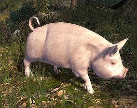3DRT - Pig animated