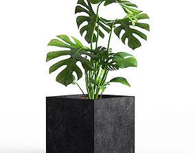 3D model Plant 03 petal