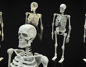 3D Skeleton Full Body