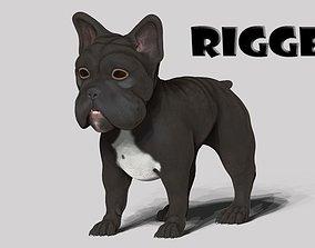 frenchie bulldog 3D asset rigged