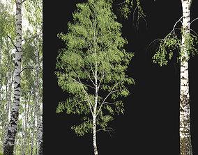 3D model Birch forest part 03
