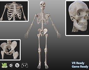 3D asset Man anatomy skeleton