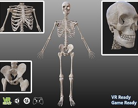 3D asset Man anatomy skeleton