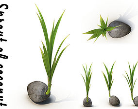 Sprout of coconut 3D model
