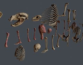 Skull and Bones 3D asset