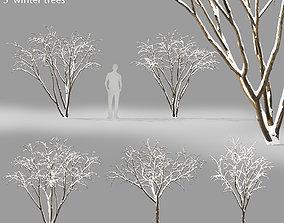 Malus Hybridus Winter 01 3D model
