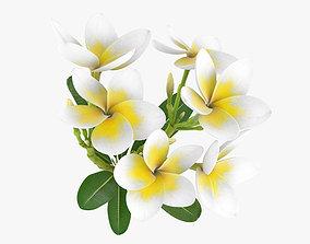 3D Plumeria decoration