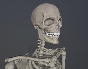Skeleton low poly 3D model realtime