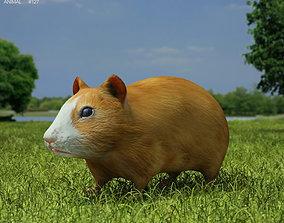 Hamster Cricetinae 3D asset
