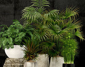 grow Plants collection 3D